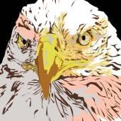 eagle1sam.